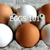 EGGS 101 FEATURED