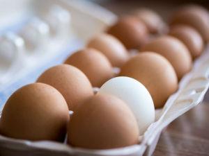 eggs final