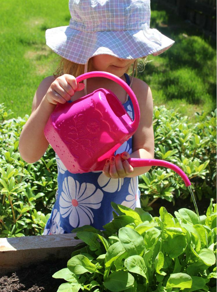 eve wateringplants arugula2